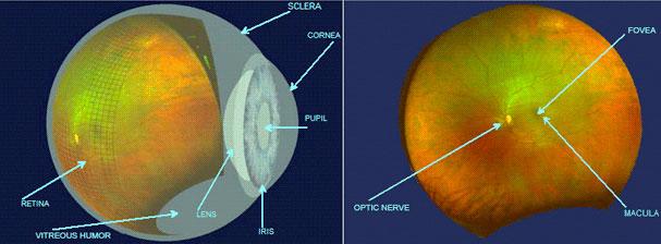 eye technology diagram